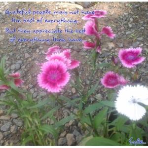 PhotoGrid_1410771006762[1]